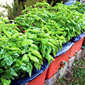 lushly planted container vegetable garden