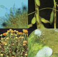 Photos used in analysing plant pathology and nematology