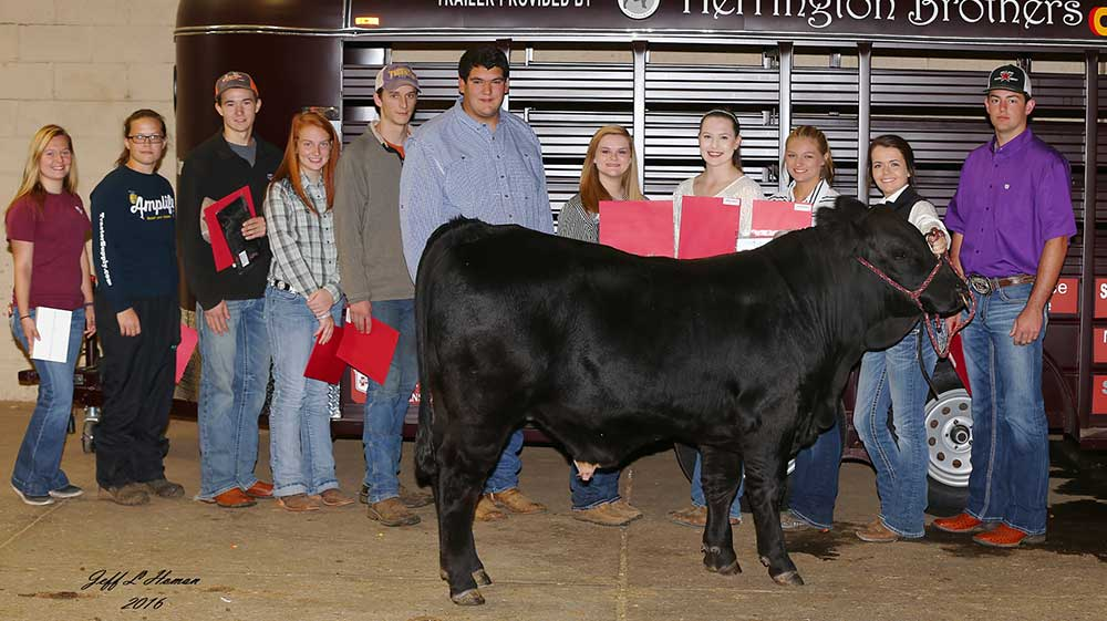 The heifer development contest winners at the Mississippi State Fair.