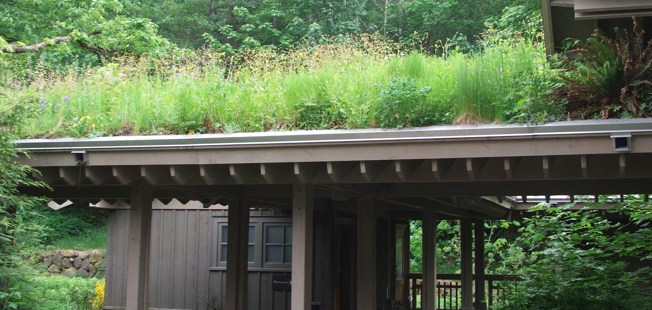 This is an image of a green roof.
