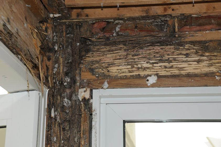 Termite damage can result in extensive damage to homes and other buildings, resulting in tens of thousands of dollars in repair costs.