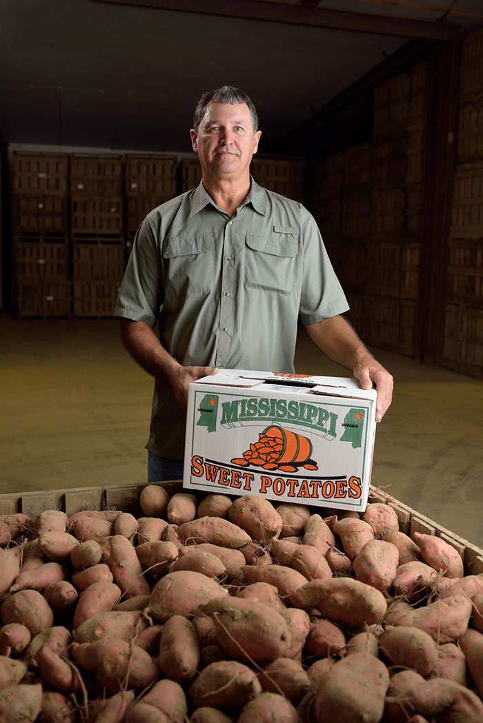 "A grey-haired man stands behind a wooden crate filled with hundreds of brown sweet potatoes while resting a white cardboard box that says ""Mississippi Sweet Potatoes"" on top of the potatoes."