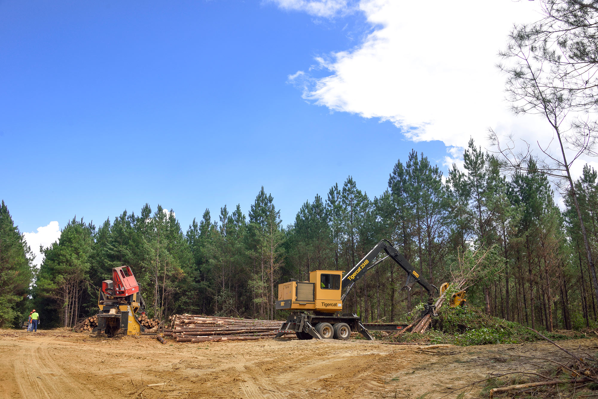 Two yellow logging machines stand in a dirt-covered patch of land. A machine on the right moves the trees, while the machine on the left sits still, waiting to be used.