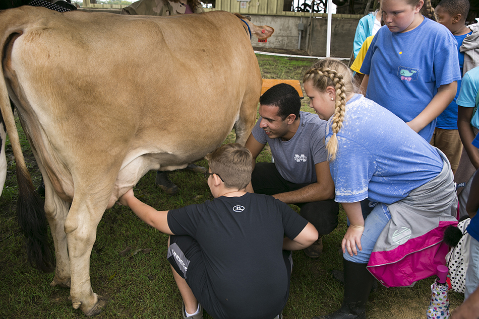 A middle-school age boy grasps the udder of a brown Jersey cow with his left hand as a male MSU student on the boy's right coaches him on technique and two middle-school age girls look on.