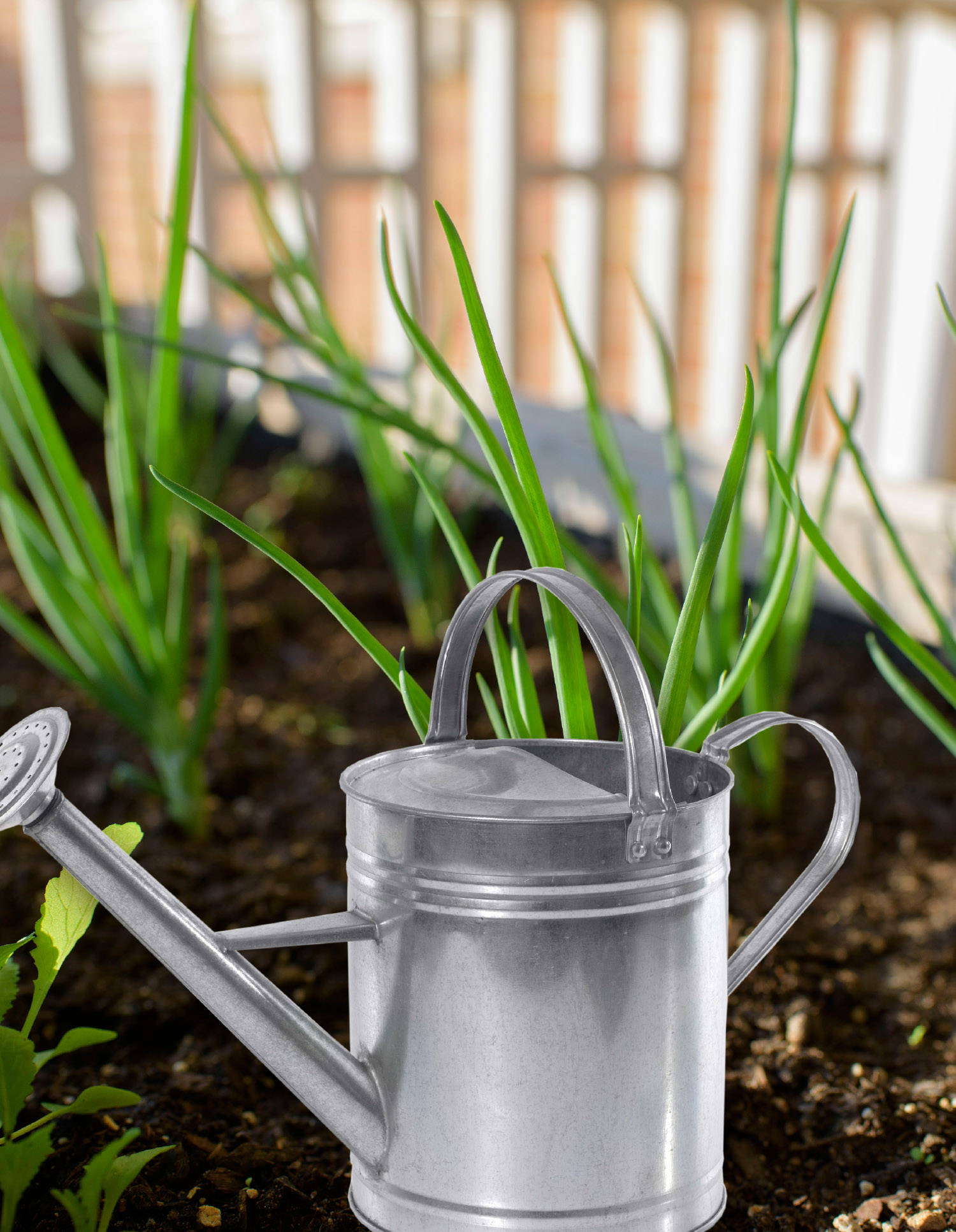 A metal watering can sits among green onions on a salad table.