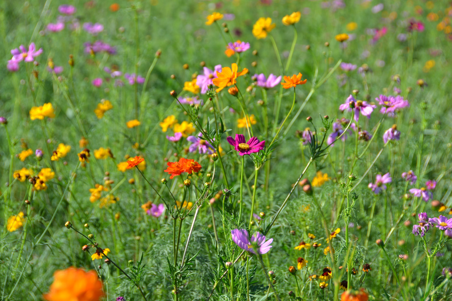 Flowers in a green field include orange, yellow and pink blooms.