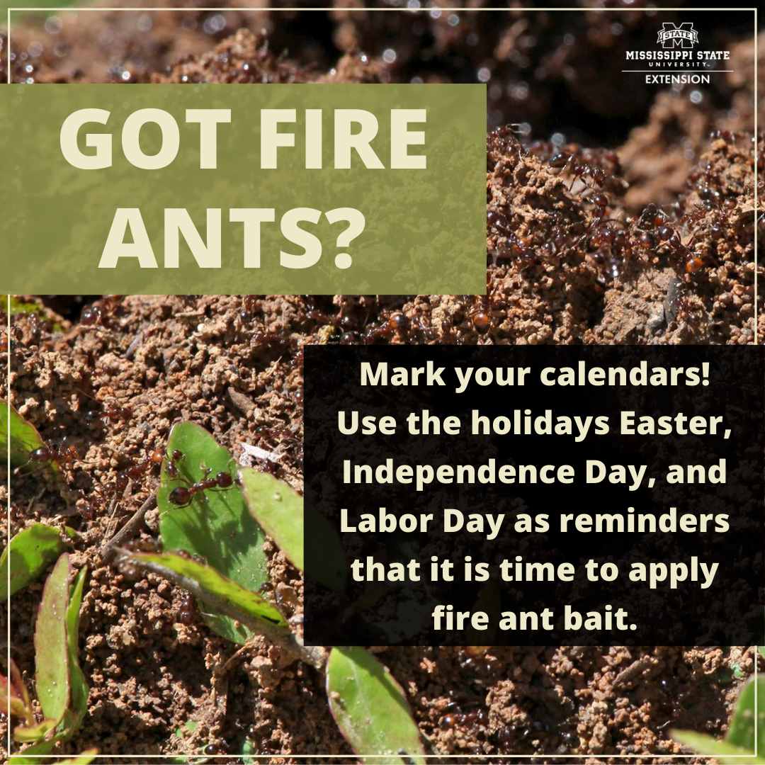 Got fire ants? Mark your calendars! Use the holidays Easter, Independence Day, and Labor Day as reminders that is is time to apply fire ant bait.