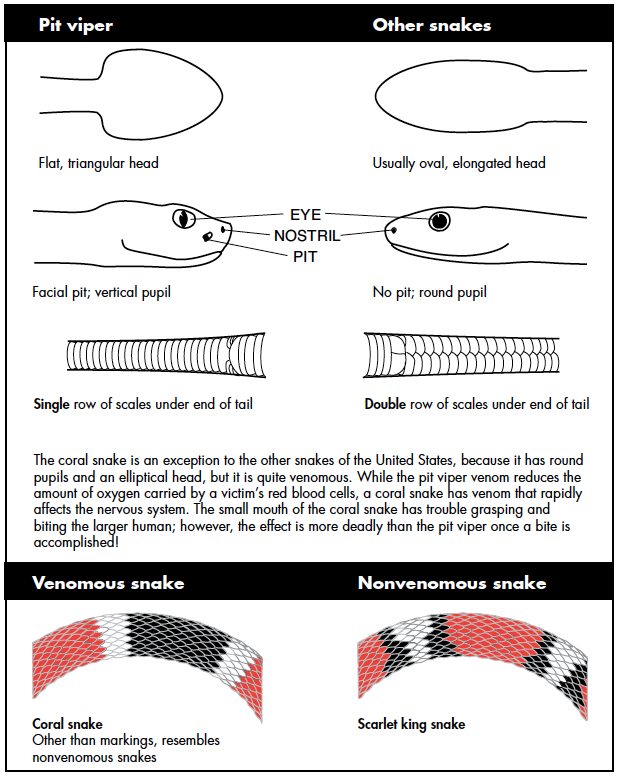 comparison of venomous and nonvenomous snakes.