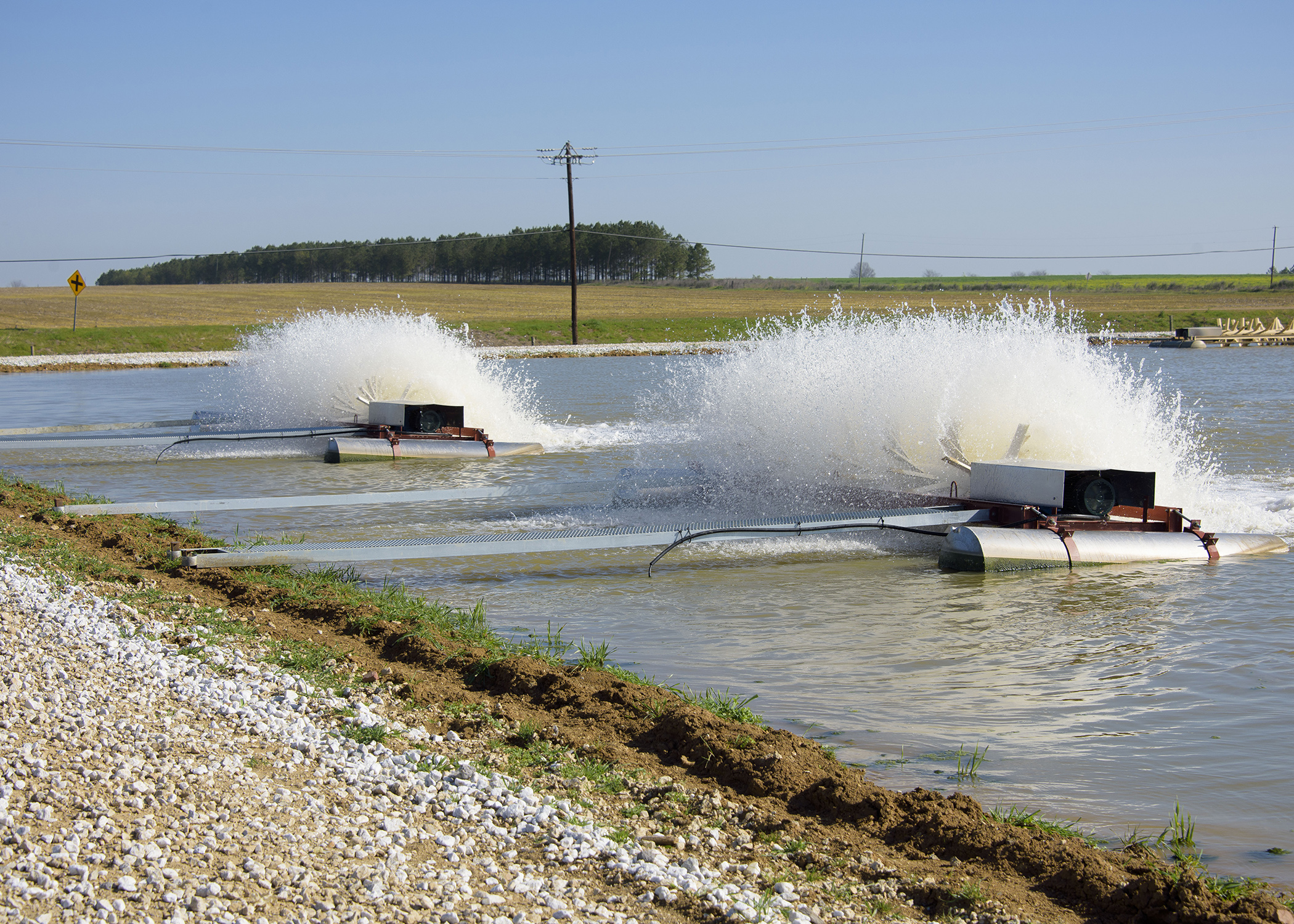 Smaller catfish ponds intensify production mississippi for Local pond supplies