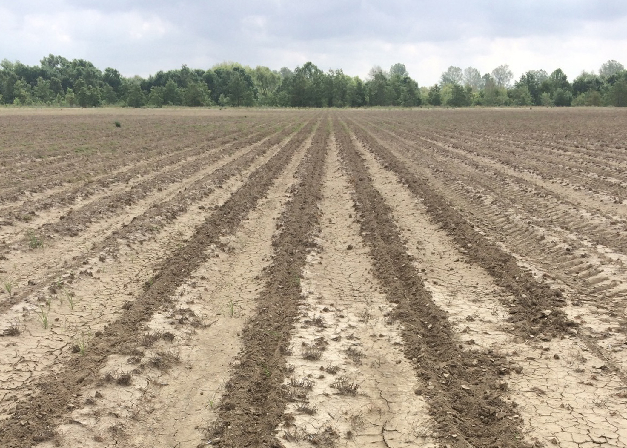 Wild Hogs Behavior Hurts Land They Roam Mississippi