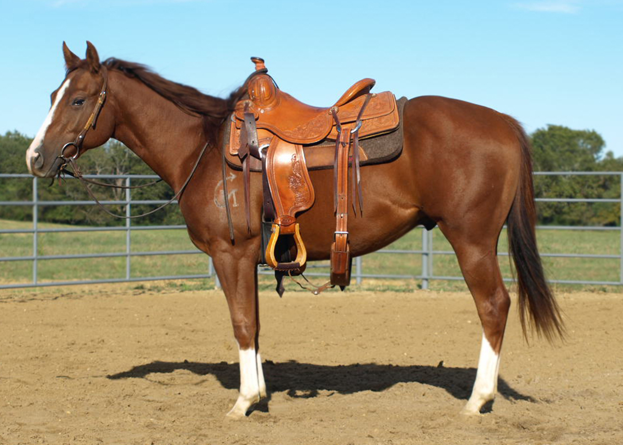 Online horse auction set for this weekend | Page 3 ...