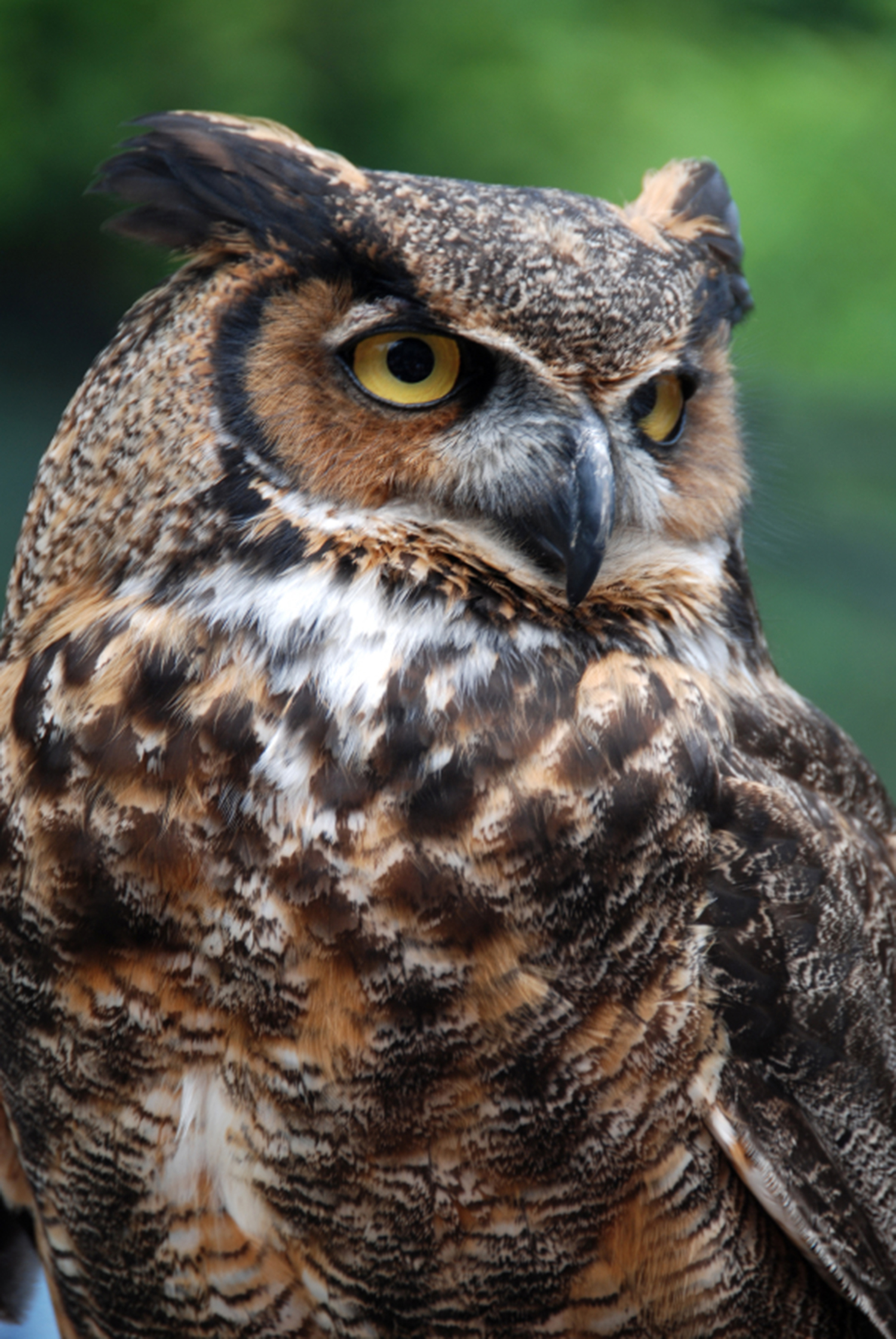 Owls bring mystery, plus rodent control | Mississippi ...