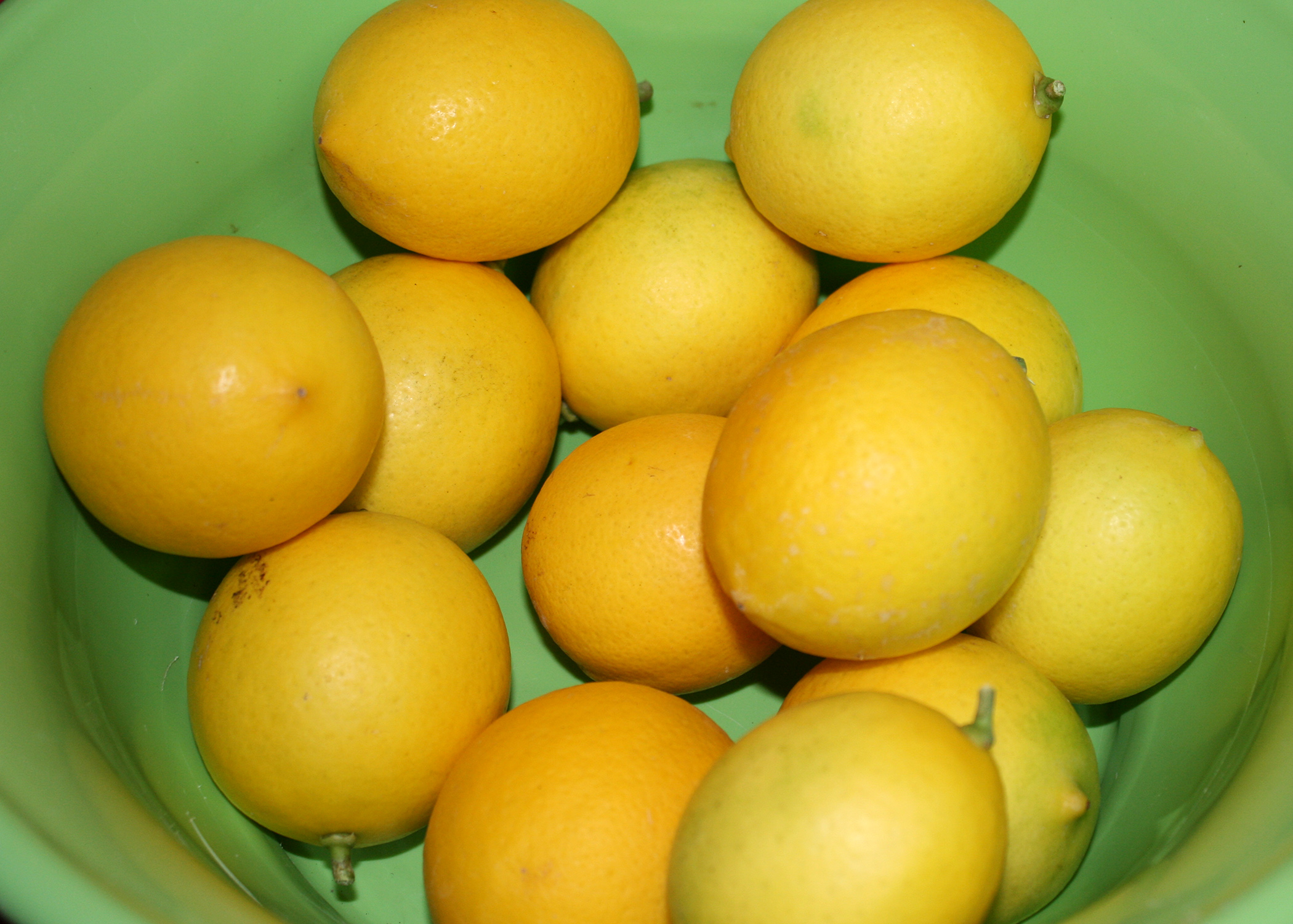 Meyer Lemons A Cross Between Lemon And An Orange Are Thin Skinned