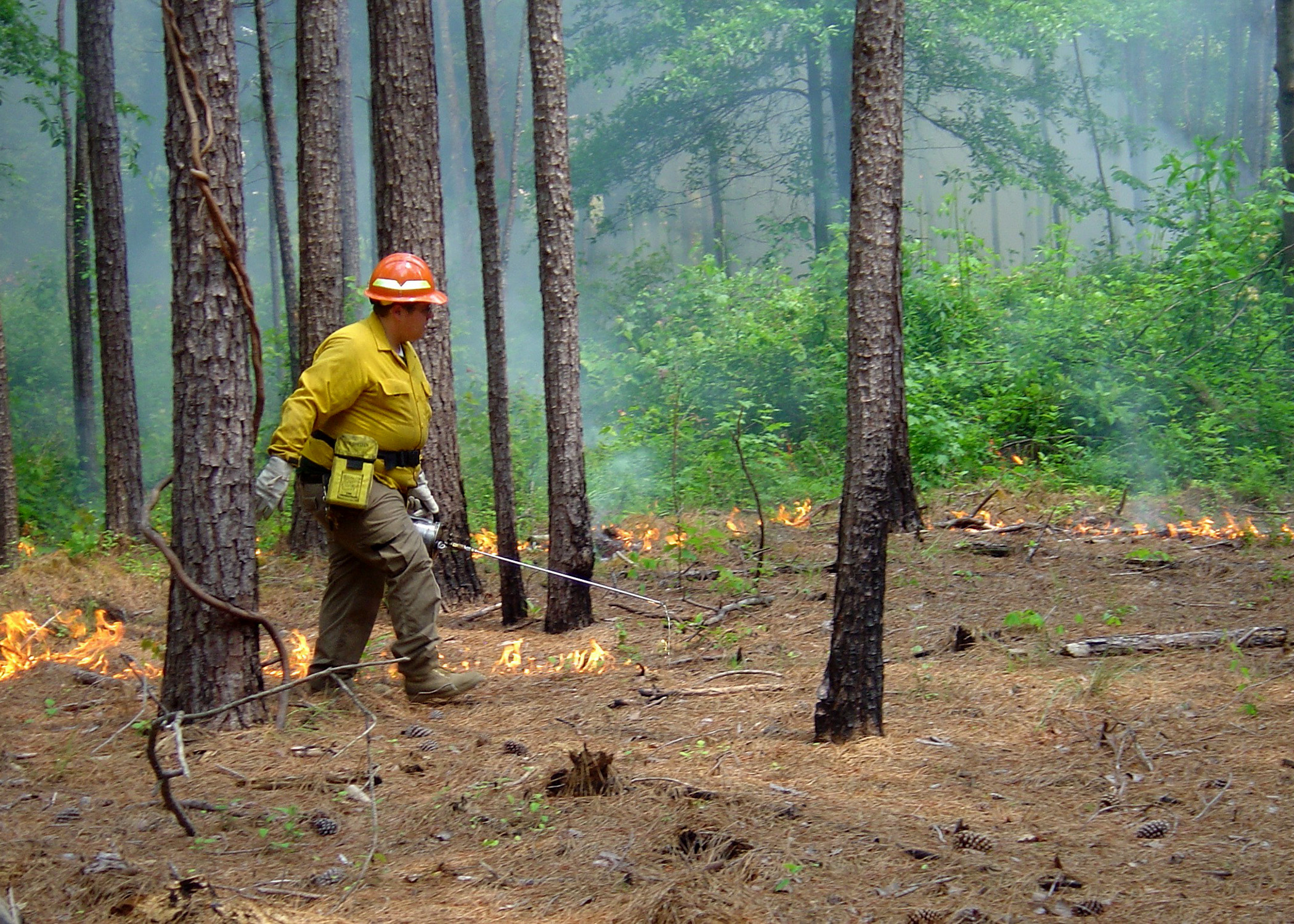 Prescribed Burning Offers Many Benefits Mississippi