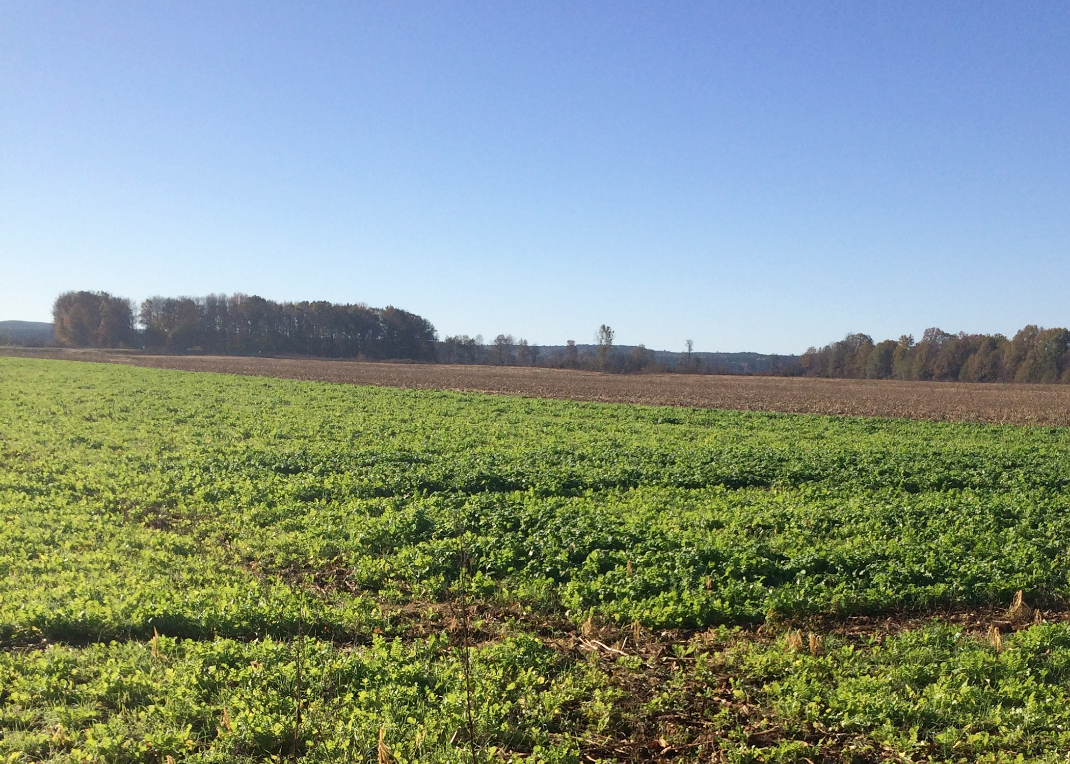 partnership to study effects of cover crops at local farm