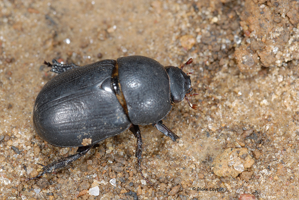 a black beetle crawling over the soil