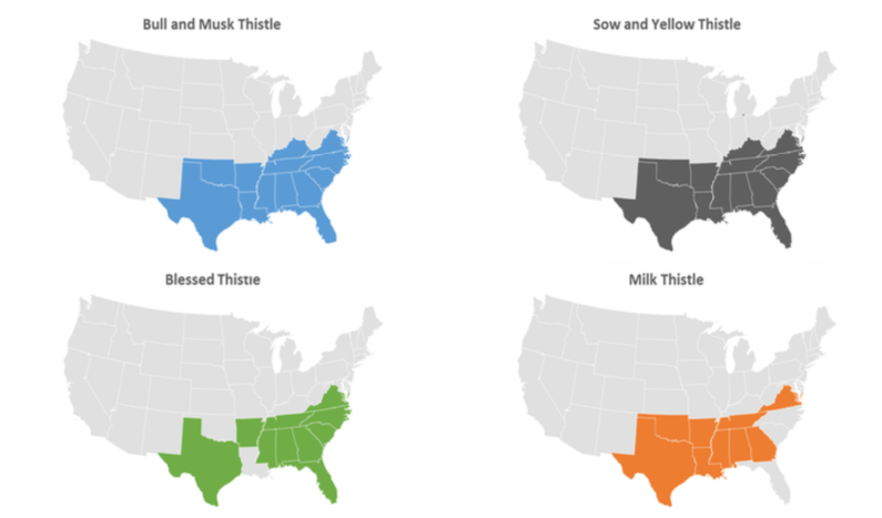 4 maps of the United States with different states shaded in to show thistle species distribution.