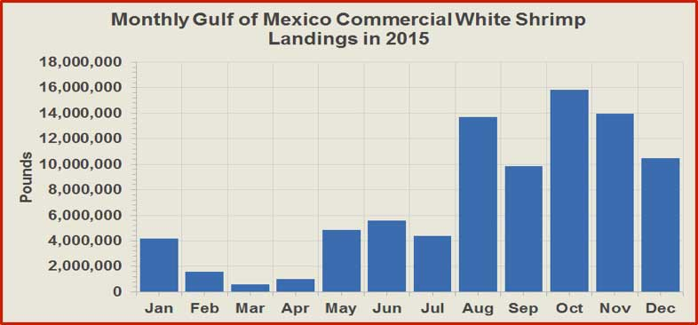 Figure 4. Monthly wild American white shrimp commercial landings in the Gulf of Mexico Region. Source of raw data: NOAA Fisheries (http://www.st.nmfs.noaa.gov/).