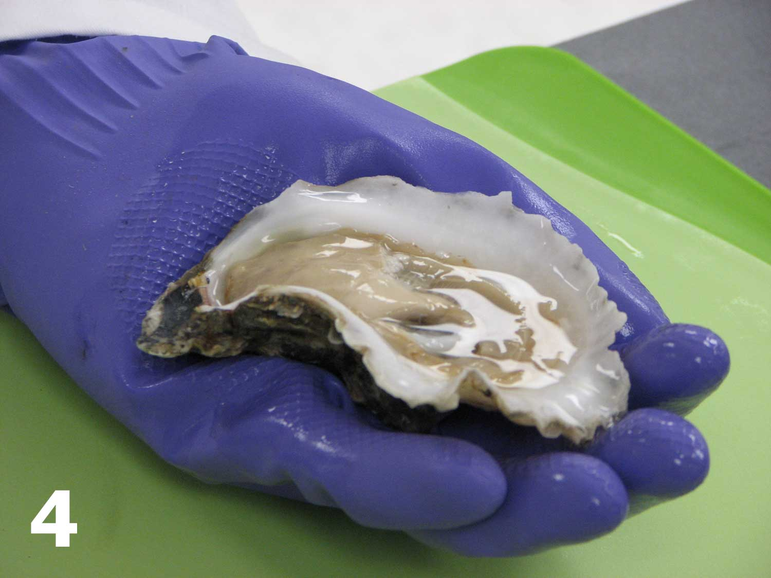 Picture 4: Someone shucking an oyster.