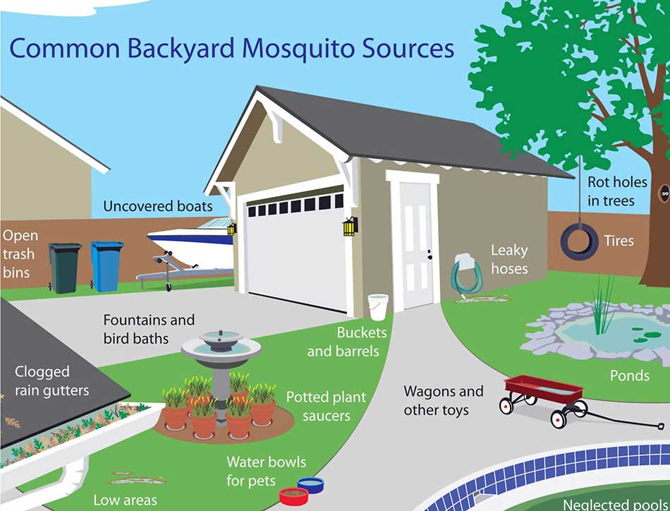 Figure 2. Common backyard mosquito sources. Graphic by the City of Southlake, Texas.