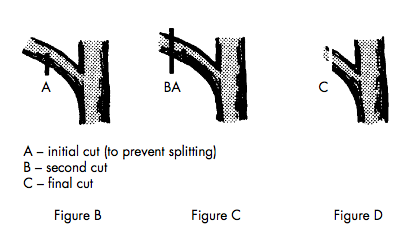 Diagram A shows the initial cut (to prevent splitting), B shows the second cut, and C shows the final cut.