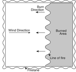 Diagram for back fire prescribed burning technique, where fire is set against the direction of the wind.
