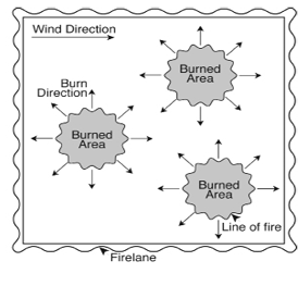 Diagram for spot fire prescribed burning technique, where individual small fires are set in different locations, gradually coming together as they expand.