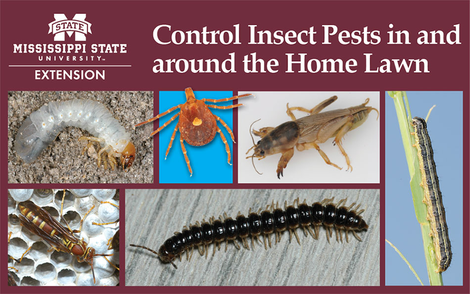 A collage of different insect pests found in and around the home.