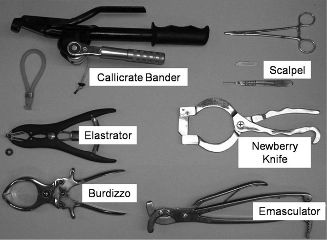 castration tools - callicrate bander, scalpel, elastrator, newberry knife, burdizzo, emasculator