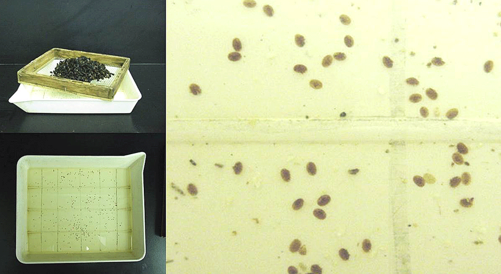 This image shows an alcohol was of varroa mites froma sample of adult worker bees.