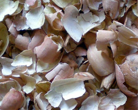 an image of peanut skins