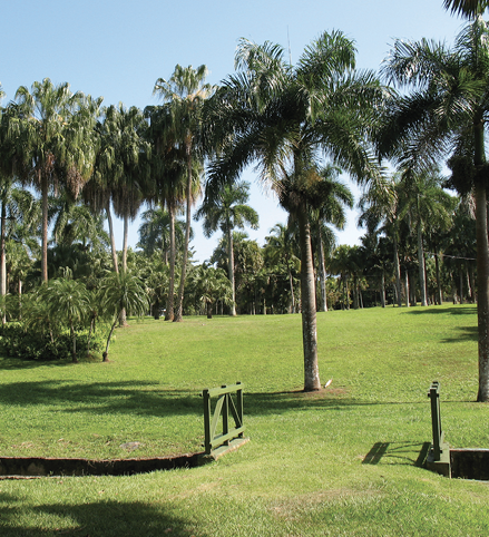 A large, green, grassy area with many palm trees in the fore- and background.