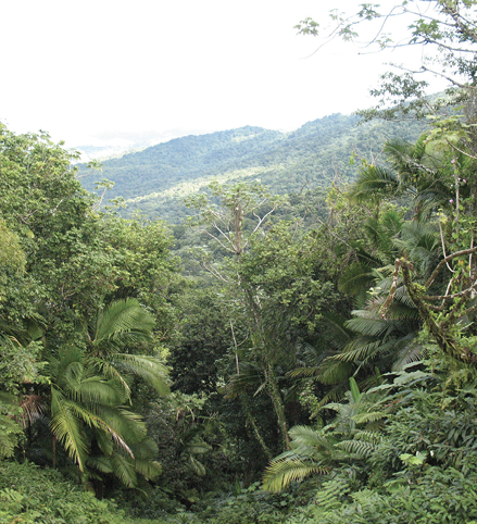 A green, brushy area with several types of plants, including palms.