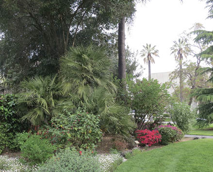 Green palms and cycads along with several other shrubs, perennials, and annuals along a border of a green lawn.