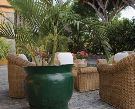 A large palm with thin leaves in a large pot at an outdoor sitting area with chairs and a table.