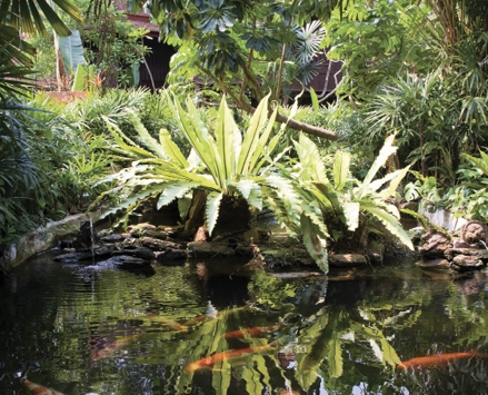 Light green palms and ferns are reflected in a koi pool with orange fish.