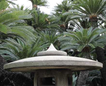Sago palms of various heights grow behind a white garden structure.