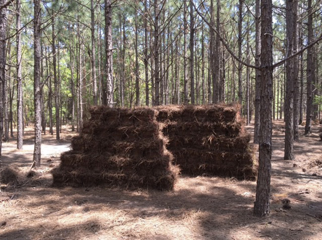 Two large stacks of pine straw surrounded by trees.