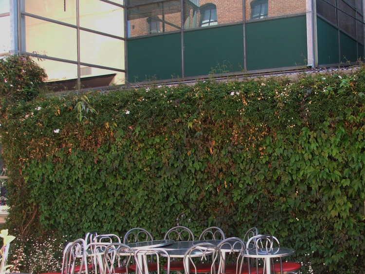 Figure 5. Green walls, such as this ivy, provide privacy as well as screening for unattractive views.