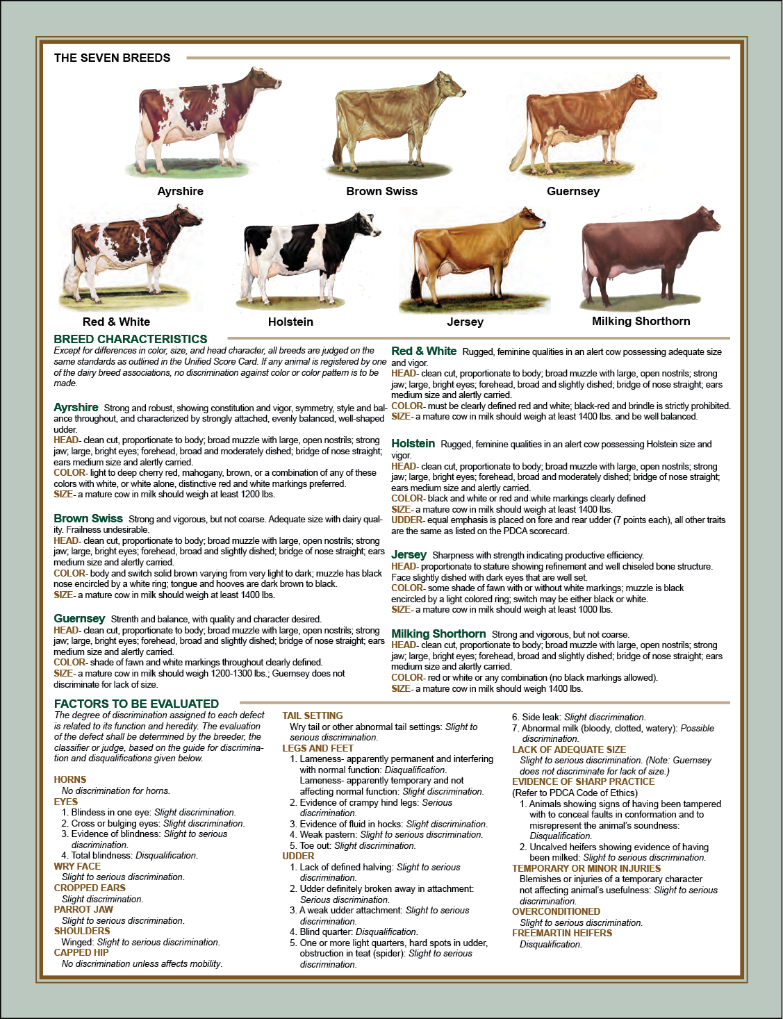 The seven breeds of cows are explained.