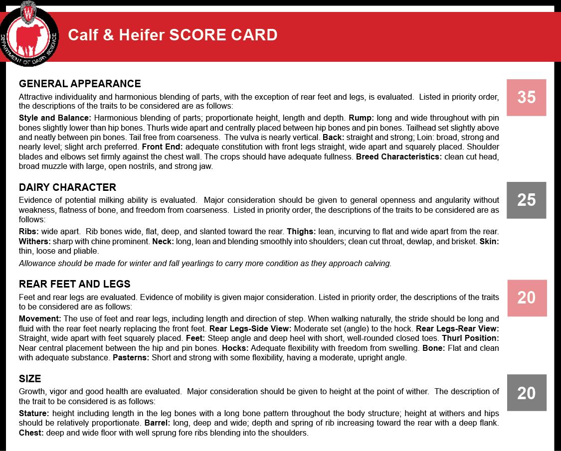 Calf and Heifer Score Card.
