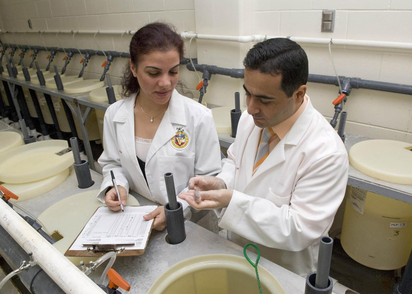 Attila Karsi, research assistant professor at Mississippi State University's College of Veterinary Medicine, and Nagihan Gulsoy, a visiting professor, examine a catfish fingerling with the disease enteric septicemia, a bacterial disease that costs the catfish industry millions of dollars each year. (Photo by Tom Thompson)