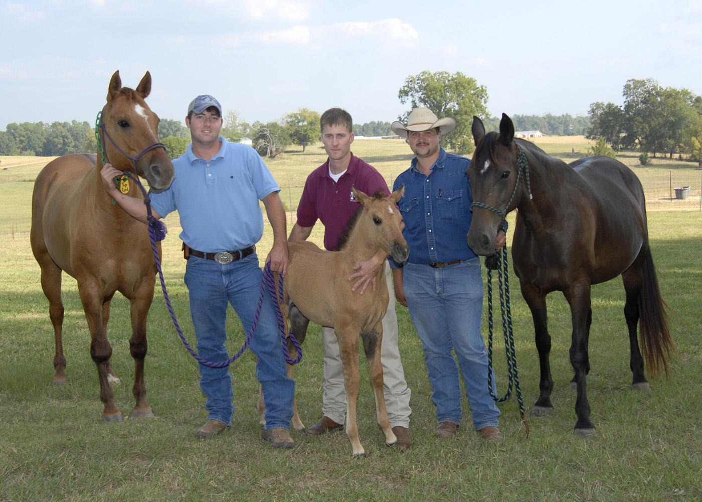 Two mothers with claim to one filly are together with Mississippi State University representatives Russ Farrar (from left), Dr. Kevin Walters and Greg Fulgham. Top Card, the filly's biological mother is a quarter horse and is on the left. Her surrogate mother, Avonlea, is a Tennessee walking horse and is on the right. (Photo by Tom Thompson)
