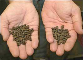 There is no difference in the appearance of conventional fish feed, left, and insect-based feed. (Photo by Bob Ratliff)