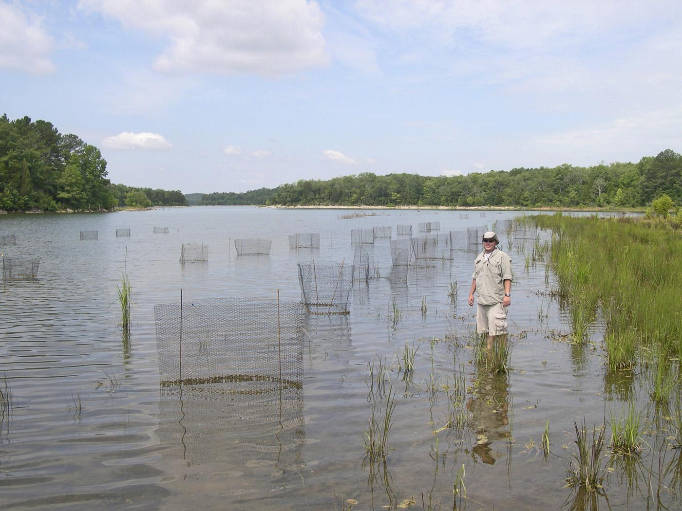 Mississippi State University graduate student Jonathan Paul Fleming researches several different plant species in the Bear Creek Lakes that may improve its habitat. (Photo by MSU Wildlife and Fisheries/Eric Dribble)