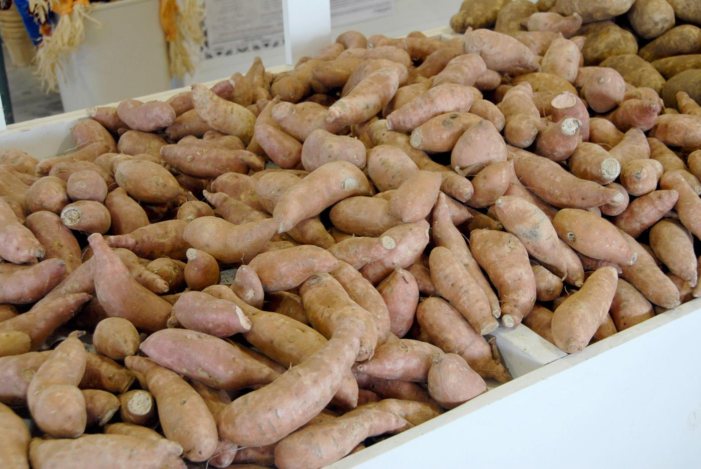 Mississippi's sweet potato industry has grown steadily, and today there are more than 90 sweet potato operations within 40 miles of Vardaman.