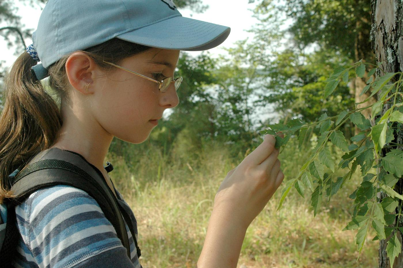 Savannah Munn , 10, of Starkville selects a leaf specimen during the insect and plant ecology camp at Mississippi State University.