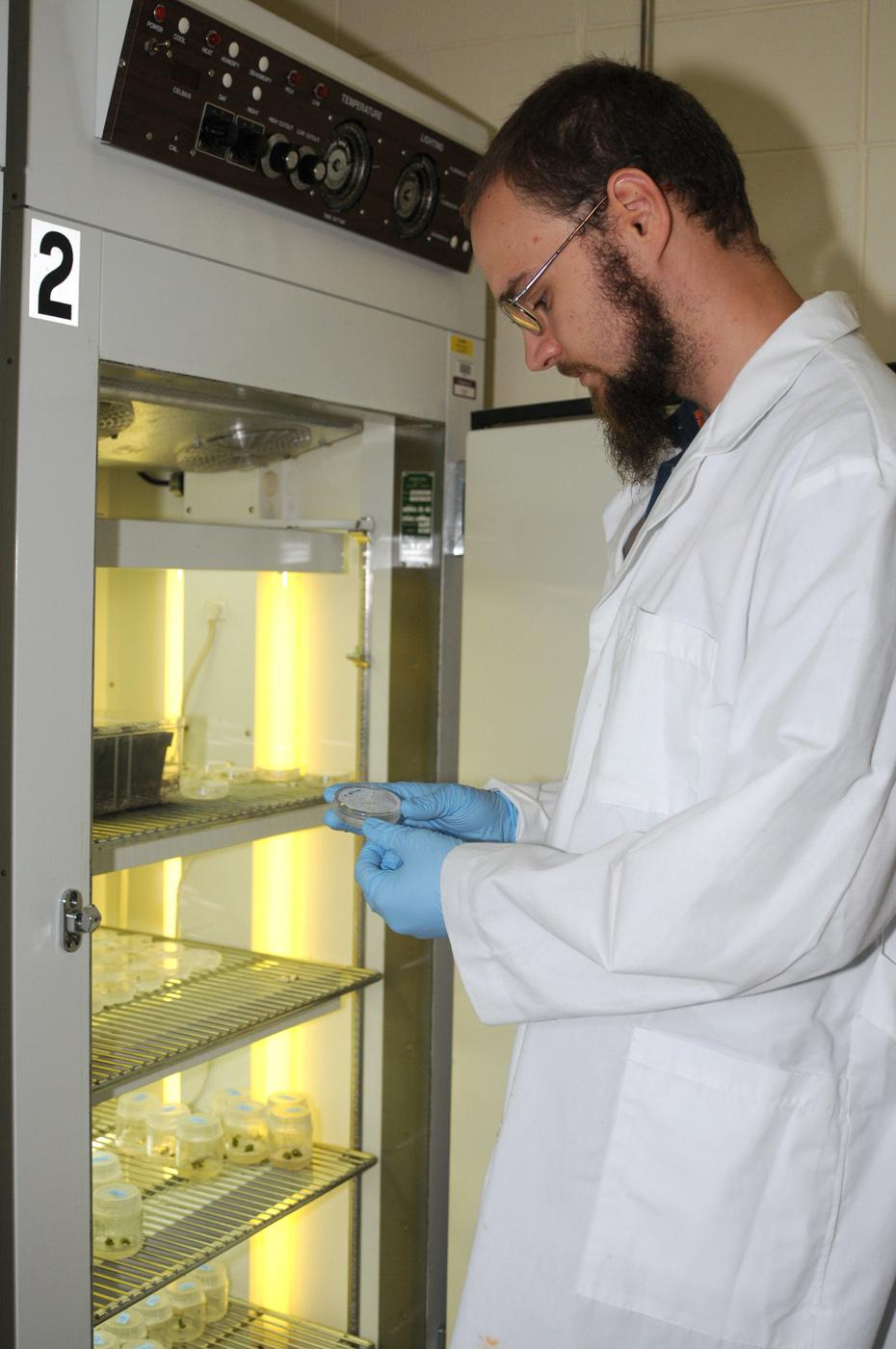 Daniel Barnes, a doctoral student at Mississippi State University, is trying to genetically modify castor seed so it can be grownsafely for commercial oil production in Mississippi. Here he checks the status of castor embryonic tissue involved in his experiments.