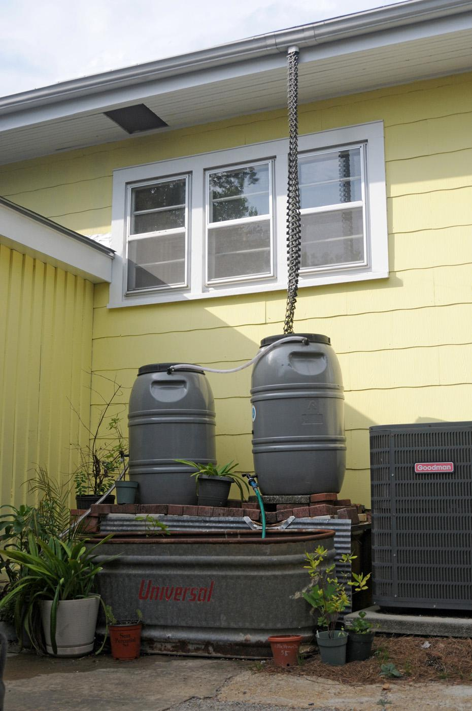 Rain barrels collect water for homeowners to use in their landscapes. The collected water is free and does not have any of the residual chemicals found in tap water. (Photo by Kat Lawrence)