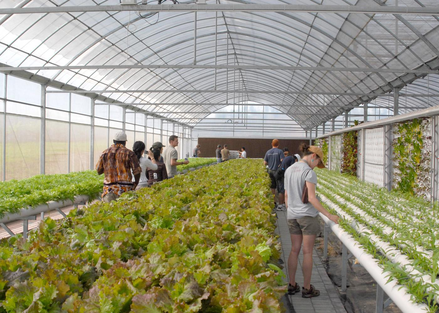 Unheated greenhouses that capture the sun's heat, allowing crops to be grown earlier or later than normal, are called high tunnels. MSU students visited several high tunnels, such as this one growing cucumbers in bags with drip fertigation in Ag Demonstration Park in Nanjing, Jiangsu Province in East China. (Photo provided by University of Arkansas/Jim Robbins)